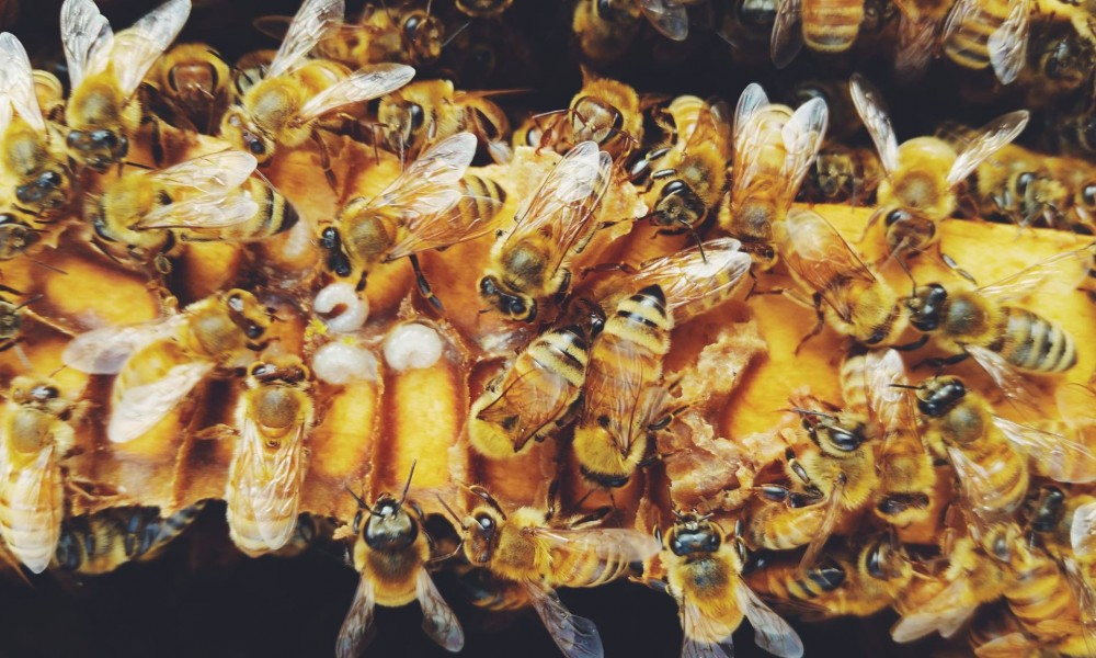 Group of working bees at one place