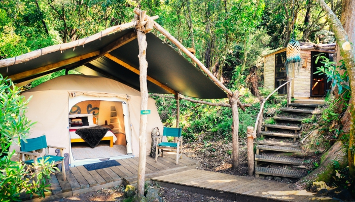 Glamping tent placed in the forest