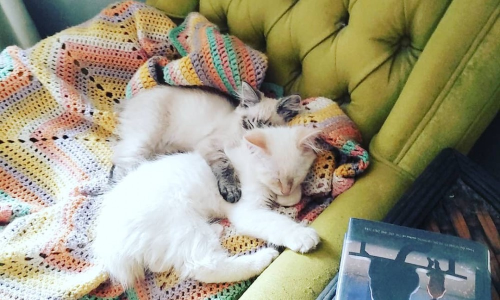 Two cats cuddling on a reading chair