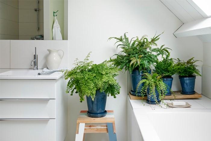 bathroom with live plants