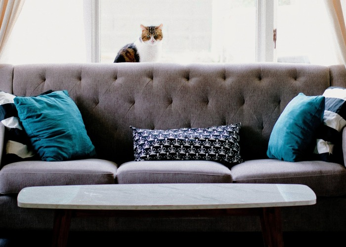 sofa with pillows and a cat