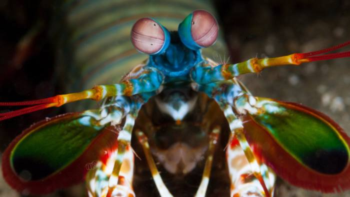 funny looking animals colorful insect