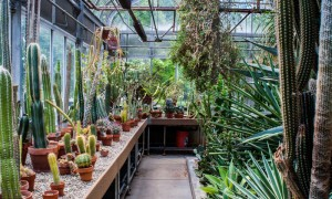 Greenhouse-design-ideas-tips