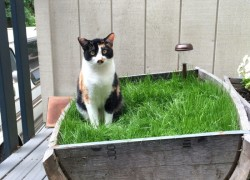 Happy cat with DIY cat garden ideas