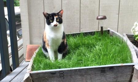 Happy cat with DIY cat garden ideas