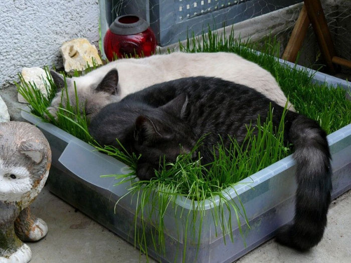 two cats sleeping in container with grass
