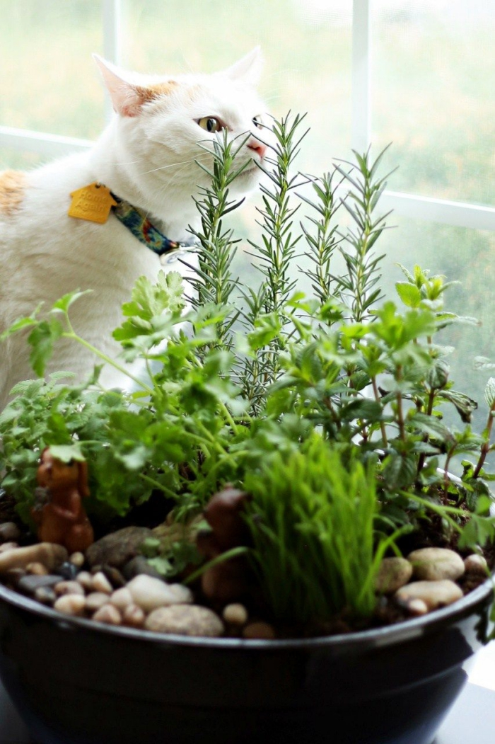 white cat sniffing herbs in a cat garden
