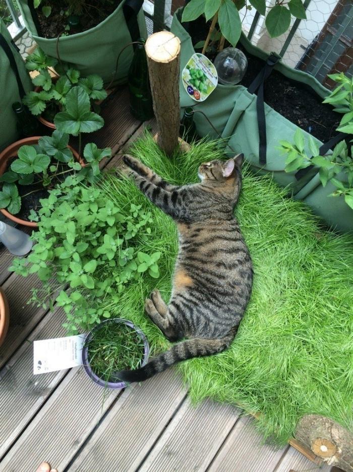 cat lying among plants in balcony cat garden