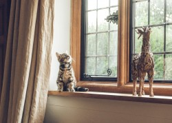 4 Signs that Show Your Windows Need Replacement