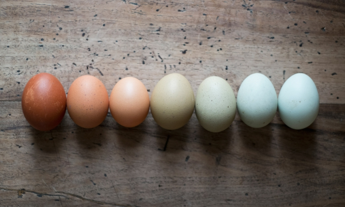 close up eggs in different colors on wooden board
