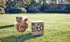 Free-Range-Eggs-Cater-Boxes