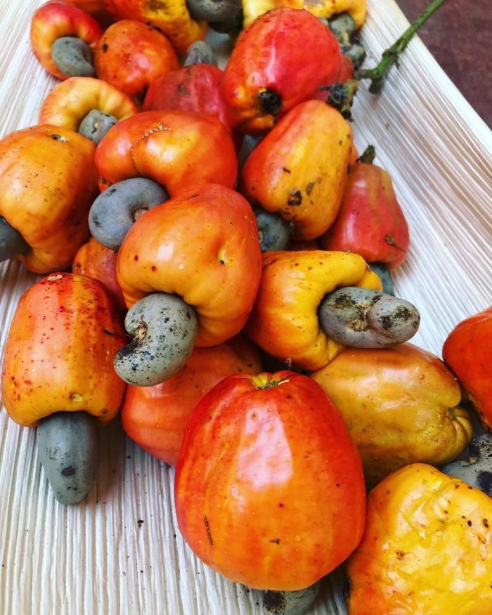 bright orange cashew apple fruits