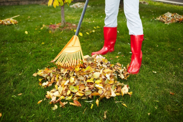 Cleaning leaves in garden autumn activities pile of leaves