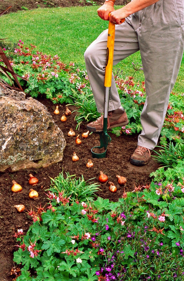 Man in grey pants planting bulbs in the garden