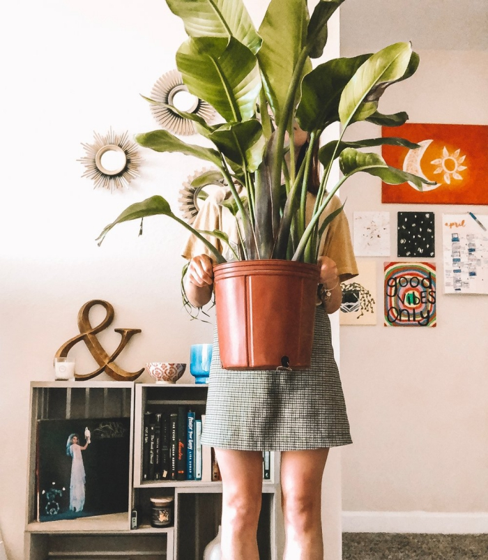 Woman holding a pot with a large mass cane plant in a living room background