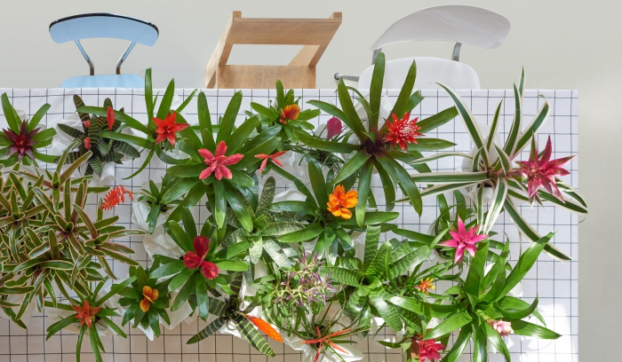 many blossoming indoor plants arranged on a table with three chairs