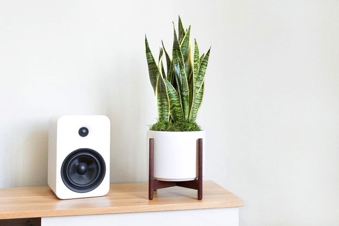 snake plant in a modern white pot on a wooden shelf with a speaker next to it