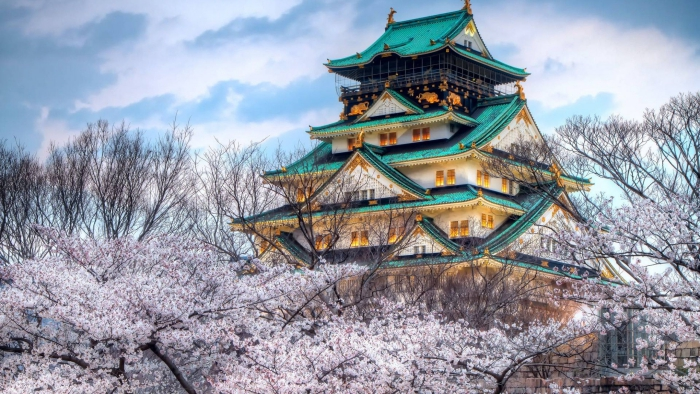 Beautiful temple in Japan in green and gold with pink blossom trees around it