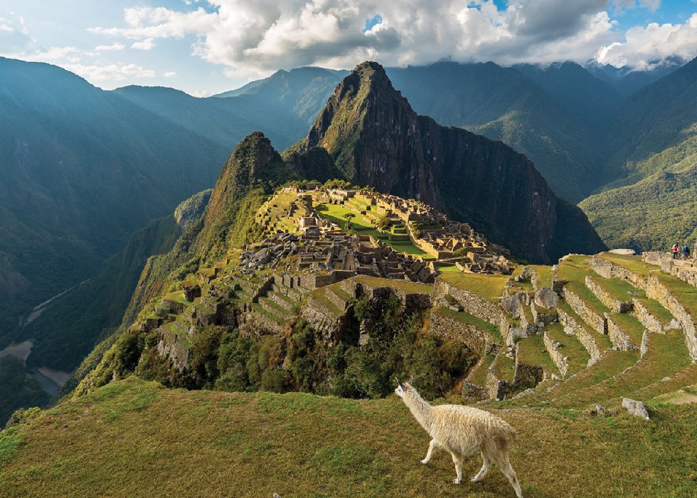 Machu Picchu view from above white lama cloudy day