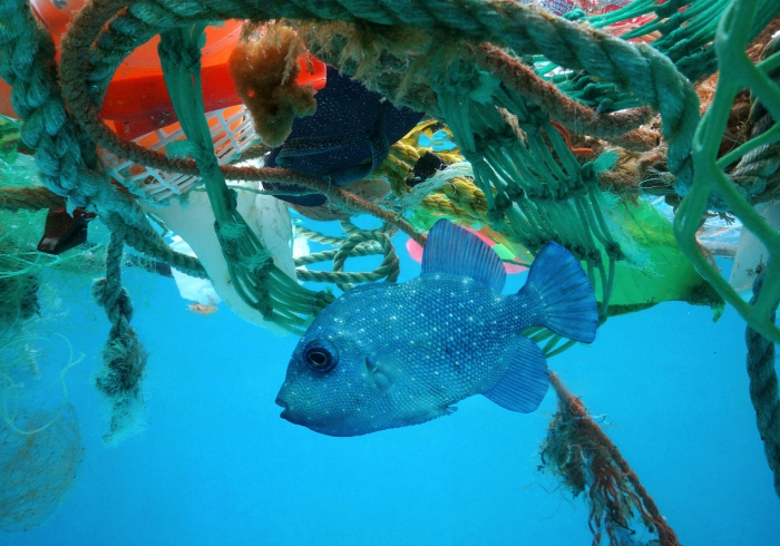 fish swimming in waters full of plastic waste