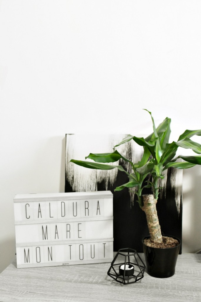 plant in a modern home environment with a black and white painting