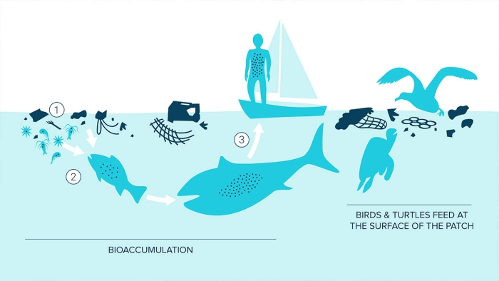 Graphic how plastic goes into human body marine life birds