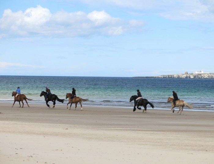 People riding horses along a beach with the sea in the background
