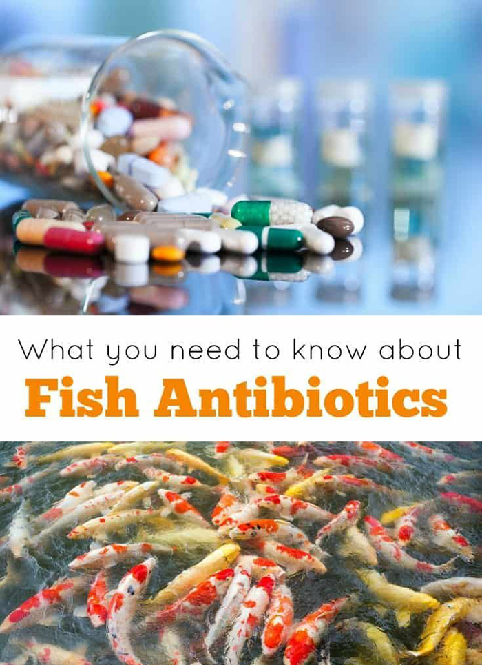 Fish in a lake and fish antibiotics in a lab