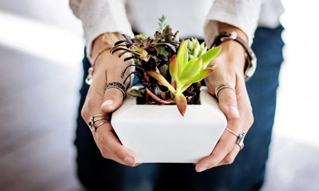 Growing-Succulent-Care-Tips