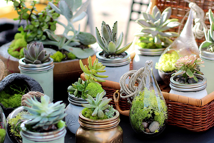 succulents potted outdoors in different jars and pots