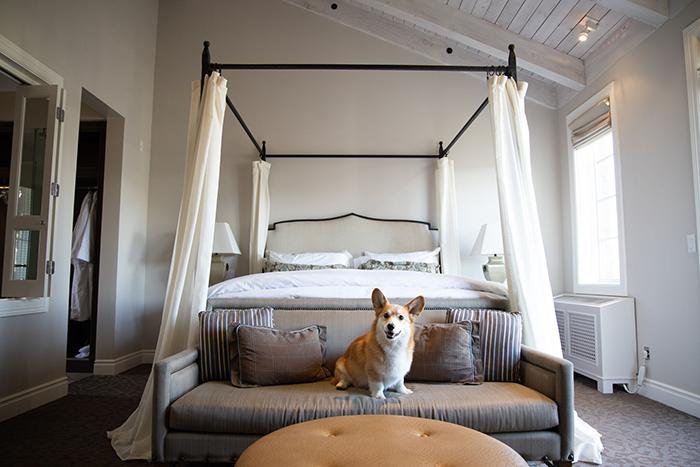 Hotel Yountville Napa bedroom interior corgi large bed