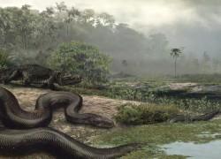 Titanoboa Snake size