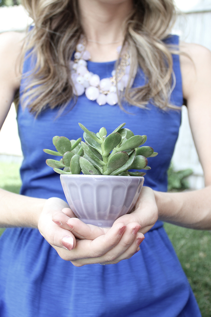 woman in blue dress holding a succulent in a pretty bowl
