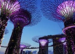 Singapore at night purple lights and big art trees