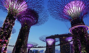 Singapore at night purple lights and big art trees