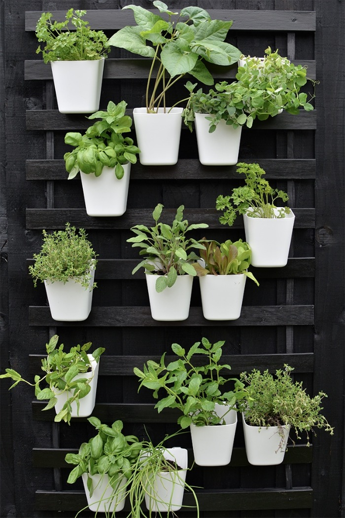 vertical planting white pots herbs on a black rack