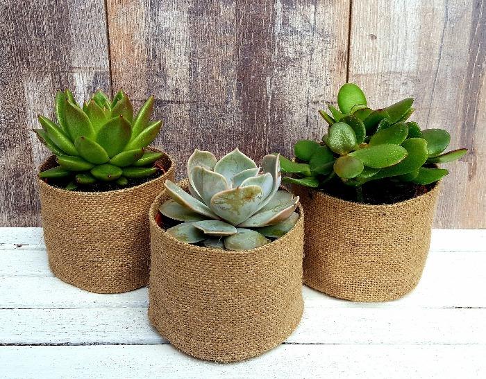 summer garden decor ideas three burlap pots with succulents