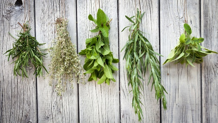 drying bouquets of herbs on a white wooden wall