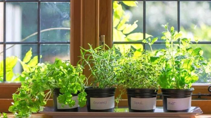 indoor herb garden pots of herbs arranged on the window sill