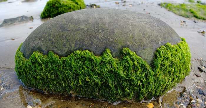 The Environmental Effects of Algae 5 Facts to Know
