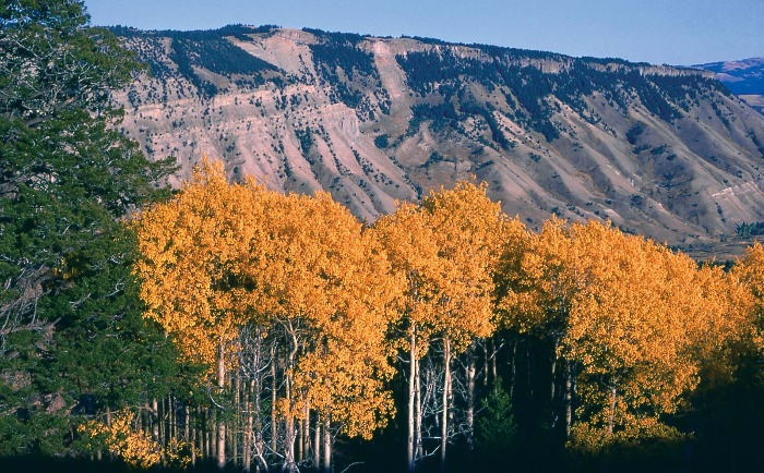 best destinations to visit in fall Yellowstone National Park colorful leaves and trees