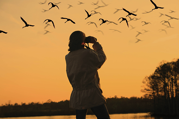 Woman dressed in a jacket watching birds at sunset over a lake