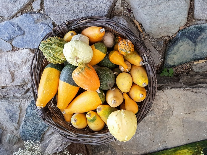 gourd harvest a basket full of yellow and green mini gourds outdoors
