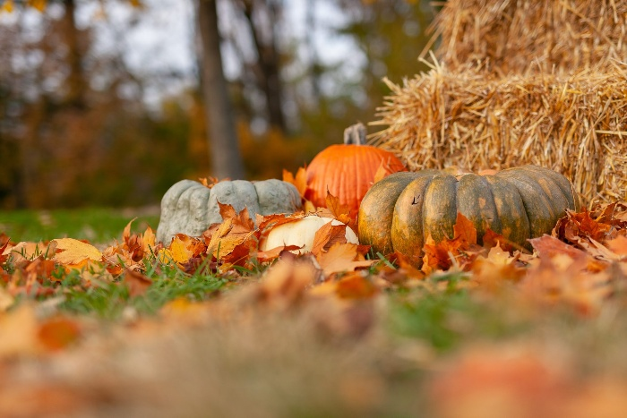 outdoor hay stacks and pumpkins in the grass fall theme