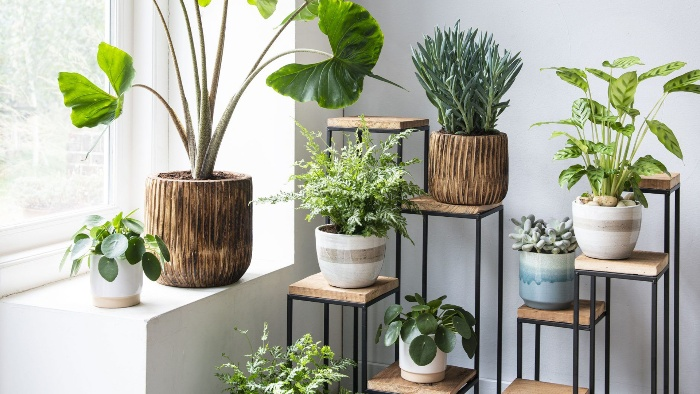 potted plants in the interior colorful pots with green plants in a white room