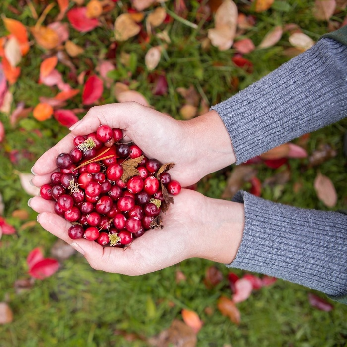 woman holding cranberries in her two hands