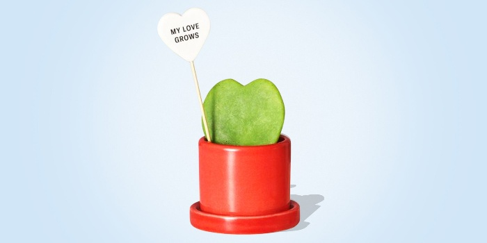 heart shaped cactus in a red pot on a light blue background with a note my love grows
