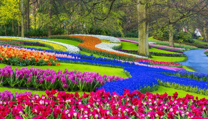 beautiful garden landscape with different color flowers