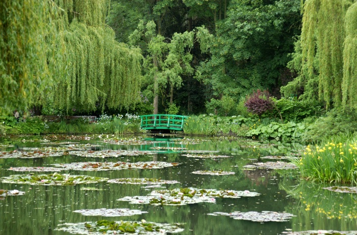monet garden giverny lilly lake with green lilies and trees around it