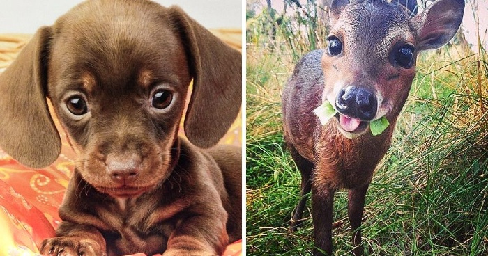 baby animals small puppy and a little deer